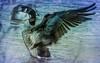 bath time for the goose HSS (Dotsy McCurly) Tags: nikond850 tamron18400mmf3563diiivchldb028n goose park lake water nature beautiful nj newjersey adobe photoshop topaz hss happyslidersunday 7dwf fauna