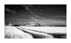 Touching Avalon (RonnieLMills 5 Million Views. Thank You All :)) Tags: infrared converted nikon barley field ringcreevy road islandhill comber newtownards scrabo tower hill tractor lines mono bw blackandwhite touching avalon ronnielmills