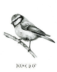 Blue Tit Sketch (Girl With Butterfly Wings) Tags: sketch drawing bluetit eurasian bird nature wings feathers art illustration