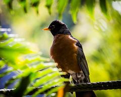 (seua_yai) Tags: northamerica california sanfrancisco thecity birdwatching bird birds seuayai sanfrancisco2018