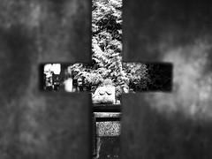 cross perspective (Darek Drapala) Tags: bokeh perspective cross bw blackwhite blackandwhite cemetery cemeteries cementary cementery panasonic poland polska panasonicg5 lumix light grave gravestone graveyard warsaw warszawa powazki