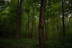 DSC_00631 (silenceinthelib) Tags: nikond3400 d3400 nature forest trees park green