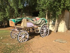 Wagon at Al Ain Oasis (Patrissimo2017) Tags: