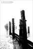 Spurn - Groyne (ScudMonkey) Tags: copyrightc2018 paulbradley spurnpoint chalkbank groyne beach defence sea wood posts weathered derelict highkey landscape seascape quadtone blackwhite eastyorkshire canon 5dmkiv ef24105mmf4lis mist