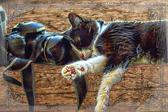 Cats and cameras ... (NancySmith133) Tags: happyscatsurday crazyoldcatlady centralfloridausa catportraits composite