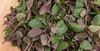 Basilicum African Blue-Magic Mountain (annick vanderschelden) Tags: leaf basil basilicum africa herb culinary pesto ocimumbasilicum basilicumafricanbluemagicmountain ocimumbasilicummagicmountain branches whiteboard depthoffield shallow edible