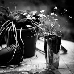 Ben's Buttercups (jayneboo) Tags: bw mono buttercups vase garden home flowers wildflowers weeds table cl 75mm summilux