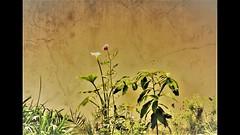 flowerpower_ (Vera Villadoniga) Tags: flower veravilladóniga primavera colours green rose white black water sky fresh seasons cat plants plant flowers flores garden boots pig roses
