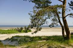 Ostsee - baltic sea (Don Bello Photography) Tags: sommer 2018 inselusedom balticsea ostsee strand kiefer acdsee mecklenburgvorpommern panasonicfz1000 lumixfz1000 reinhardbellmann donbellophotography