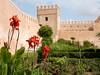 Andalusian Gardens, Kasbah des Udayas, Rabat (Mulligan Stu) Tags: kasbah maroc andalusiangardens kasbahdesoudayas rabat kasbahdesudayas morocco cats
