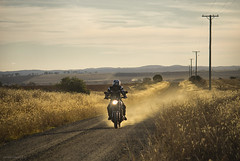 outback road (gnarlydog) Tags: australia adaptedlens manualfocus sunset dust dirtroad motorcycle vanishingpoint xsr900 outdoors outback rural grass backlit winter yamaha retro vintagelens vintage warmlight shallowdepthoffield contrejour silhoutte steinheilmunchen arguscintar100mf45
