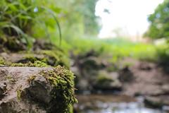 By the Stream (benjamin.t.kemp) Tags: moss nature green rock stream bokeh mothernature macroaddicts