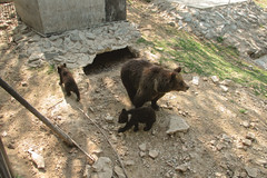 *** (i13rbk) Tags: fareast zoo khabarovsk zoogarden animals spring amur park forest shore