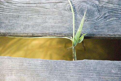 Шацький Національний Природний Парк Озеро Пісочне  МІстки InterNetri  Ukraine 135