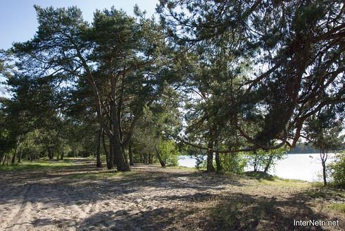 Шацький Національний Природний Парк Озеро Пісочне Сосни InterNetri  Ukraine 367