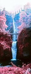 Multnomah Falls (Blurmageddon) Tags: 35mm filmphotography kmzhorizont panoramic panorama colorinfrared kodak fpp infrared infrachrome e6 pakonf135 nexlab oregon eir surreal yellowfilter