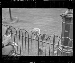 Park Life (The Gadget Photographer) Tags: analogue ae1 hc110solutionbfromstock6min20ckodak iso400 ilfordrapidfixer trix canon blackandwhite film tobyhetherington©2018 london england unitedkingdom gb