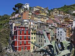Riomaggiore (RobertLx) Tags: europe city architecture italy cinqueterre riomaggiore building steep colourful facade town nationalpark