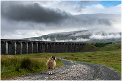 New security doesn't impress at Ribblehead Viaduct (nathian brook) Tags: yorkshiredales yorkshire landscape dales