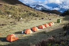 Bivouac at Robluthang - Gasa District - Snowman Trek - Bhutan (PascalBo) Tags: nikon d500 asie asia southasia asiedusud drukyul drukgyalkhap bhutan bhoutan འབྲུག་ཡུལ། འབྲུག་རྒྱལ་ཁབ་ snowman trek trekking hike hiking lunana himalaya himalayas jigmedorjinationalpark gasa tent bivouac camp campement outdoor outdoors pascalboegli
