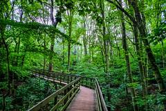 Tussen de bomen (thijs.coppus) Tags: lopen walking grün green avond groen wandelpad wandelen pad baum boom baumen bomen trees wood bos leiden wassenaar valkenburg holland katwijk