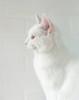 Badu the White (Jenny!) Tags: white mobshot badu