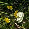 Exmoor Trails (northdevonfocus) Tags: exmoornationalpark moorland floraandfauna nature moss