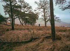 A secret location, Scotland. (wojszyca) Tags: fuji gsw680iii 6x8 120 mediumformat fujinon sw 65mm kodak portra 400 epson v800 landscape grass trees nature overcast hills photographer guide secretplace