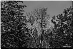 FEBRUARY 2018 NGM_7154_3796-1-222 (Nick and Karen Munroe) Tags: wintry winter fog foggy winterfog winterwonderland mist misty fogpatches downtownbrampton downtown bramptoncityhall bramptonnewcityhall cityhall architecture buildings karenandnick munroe karenmunroe karen landscape ontario outdoors brampton bramptonontario ontariocanada nikon nickandkaren nickandkarenmunroe karenick23 karenick karenandnickmunroe nature canada nick d750 nikond750 munroedesigns photography munroephotoghrpahy nickmunroe munroedesignsphotography munroephotography munroenick landscapes beauty brilliant nikon2470f28 2470 2470f28 nikon2470 nikonf28 f28 blackandwhite bw blackwhite bandw monochrome mono