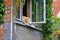 relax :) (majka44) Tags: window facade dog animal flowers leaves light autumn