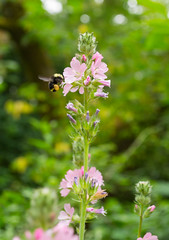 bumble bee (jillian rain snyder) Tags: nature hike insects flowers oregon pacific northwest macro