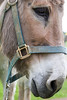 Donkey (N. Eisengrein Photography) Tags: neisengreinphoto animal animals farm nature outside donkey closeup sharp farmanimals contrast
