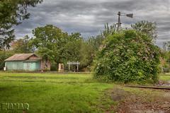 Estacion Santa Coloma (Marina-Inamar) Tags: santacoloma argentina buenosaires estaciondetren plantas challengegamewinner challengegroupgame