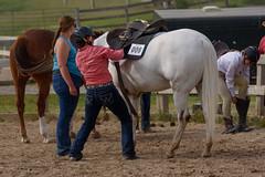 JBC_5622.jpg (Jim Babbage) Tags: krahc horseshow appaloosa horses 2018 bethany
