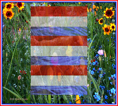 AMERICA THE BEAUTIFUL (Day Night Tripper) Tags: flower flowers blooms garden gardens fruit vegetables flowergardens vegetablegardens fruits citrus tomatoes peppers chilepeppers eggplant nature bluomen blumen natuur natur wildebluomen agriculture farms ranches crops spring summer winter autumn ghostpeppers bellpeppers blossoms sun sunrise sunset bokeh california usa trees oaktrees ashtrees sycamoretrees vibrant shadows violet clouds storms rain homegardens homegardening graphic design graphicdesign america northamerica flags