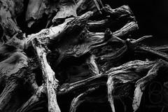 Twisted_Wood (eightsix.photo) Tags: affinity affinityphoto art abstract bandw blackandwhite blackwhite bw canon contrast dslr england eightsixphoto light minimal minimalism monochrome mono nature noiretblanc noirblanc outdoor plant uk wood tree log processed
