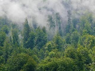 Regen und Wald im Morretal