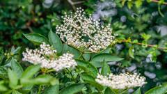 Nettle hill Circular Walk 17th June 2018 (boddle (Steve Hart)) Tags: stevestevenhartcoventryunitedkingdomcanon5d4 nettle hill circular walk 17th june 2018 steve hart boddle steven bruce wyke road wyken coventry united kingdon england great britain canon 5d mk4 6d 100400mm is usm ii 2470mm standard wild wilds wildlife life nature natural bird birds flowers flower fungii fungus insect insects spiders butterfly moth butterflies moths creepy crawley winter spring summer autumn seasons sunset weather sun sky cloud clouds panoramic landscape rugbydistrict unitedkingdom gb