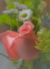 flores pastel (Pejasar) Tags: painterly paint pastel flower rose pink bouquet flores digitalcreations art beauty blooms blossoms tulsa oklahoma nikon d7200