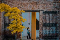 Recoleta - Buenos Aires (TransÁnimas) Tags: buenos aires street sunrise outside urban