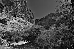 Tall Mountainsides All Around While Walking to Lower Burro Mesa (Black & White, Big Bend National Park)