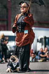 PugCrwal-88 (sweetrevenge12) Tags: pug parade crawl brewing sony pugs dog pet