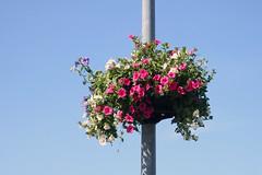 Lilleampel (Jaan Keinaste) Tags: olympussh1 eesti estonia jürialevik lilleampel lill flower