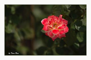 SHF_6802_Sunlight