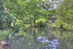 Peaceful Waters (ArtGordon1) Tags: eppingforest knightonwood england uk june 2018 sunner trees woodland reflections reflection pond water davegordon davidgordon daveartgordon davidagordon daveagordon artgordon1 rhododendron rhododendrons