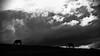 Un air de fin du monde (rknecht) Tags: landscape field champ cheval horse sky clouds nuages nature noiretblanc blackandwhite orage thunder monochrome contrast contraste light lumière rayons campagne countryside doubs franchecomté franchecomte hautdoubs france canon650d canonefs24mm groupenuagesetciel