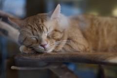 (autoworks31) Tags: fujicolour streetphotographer streetphotography xpro1 fujifilm catcafe sleepingcat cat