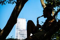 Musician (Maria Eklind) Tags: malmögardenshow2018 outdoor malmögardenshow silhouttes malmö musician slottsträdgården flower trädgård sweden slottsparken blommor silhuetter garden gardendesign skånelän sverige se