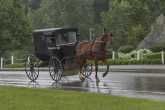 Rainy Ride (player_pleasure) Tags: amish horse travel buggy rain
