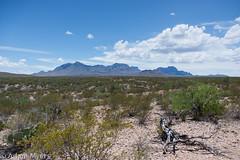 Big Bend- Across the desert